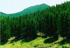 广西贵港现代林业产业高质量发展方案绵阳